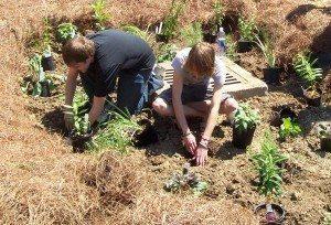 Goshen High School students plant their rain garden.