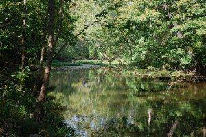 Wilson Nature Reserve