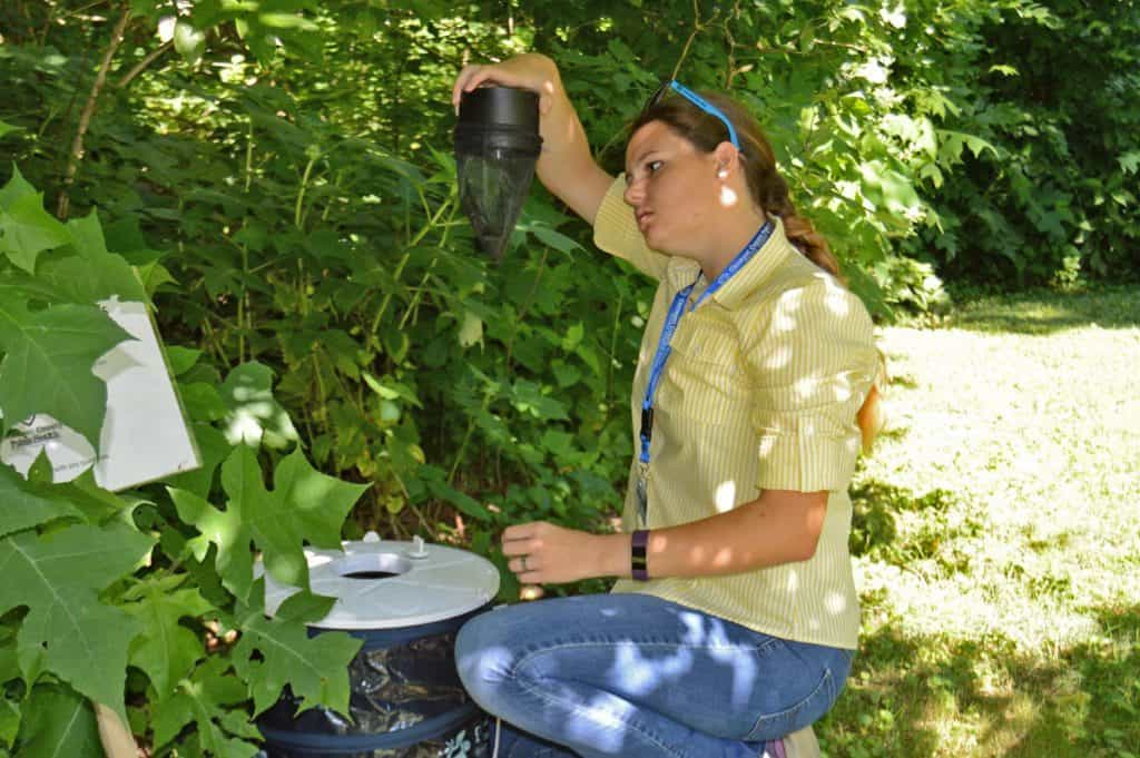 Image of Kate Woods inspecting a mosquito trap